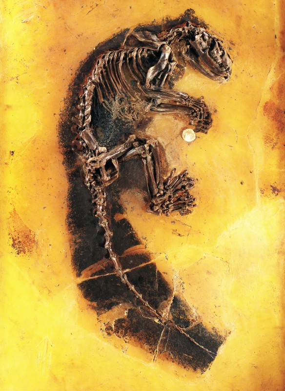 Die Grube Messel – ein einzigartiges Fenster ins Eozän - labor&more